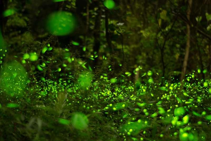 每年的4月下旬至5月底是螢火蟲繁殖的季節,提供你北中南東的賞螢景點,趕快提前安排行程吧!(圖/偉偉&Wei Wei@flickr)