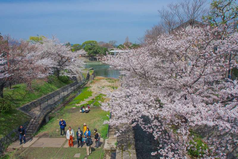 南禪寺櫻花。(othree@flickr)