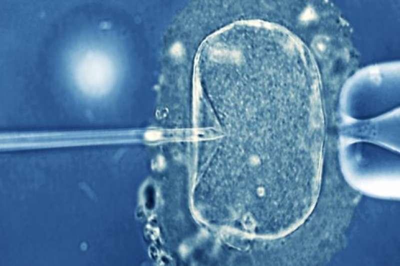 胚胎被儲存了幾年。(BBC中文網)