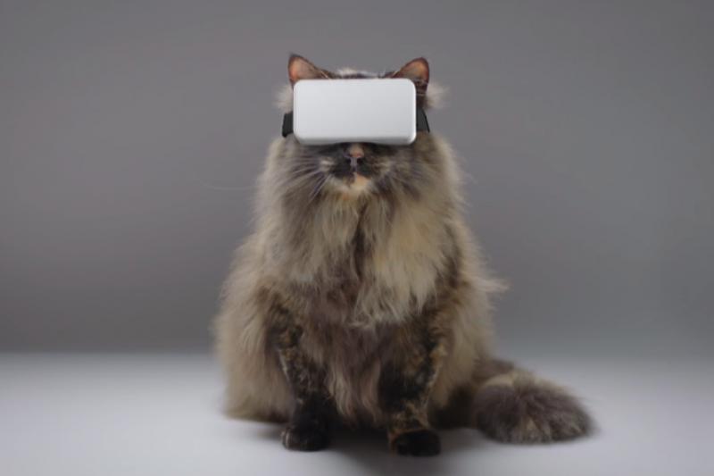 外國公司推出貓咪用 VR 裝置,讓貓咪即使不出門,依舊能體驗再戶外探險的快樂。(圖/翻攝自 Youtube,智慧機器人網提供)