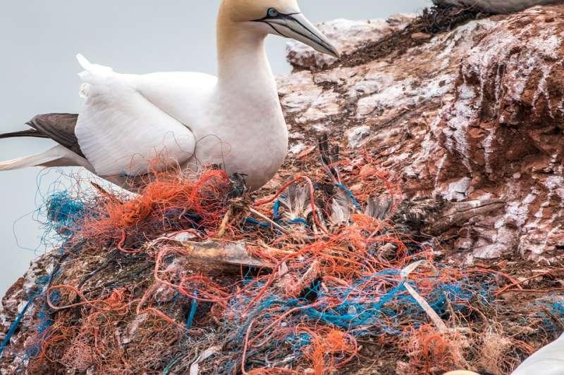 荒野保護協會公布2019年ICC淨灘行動數據,海洋廢棄物近70%都是寶特瓶、吸管、飲料杯等塑膠製品。(示意圖/the3cats@pixabay)