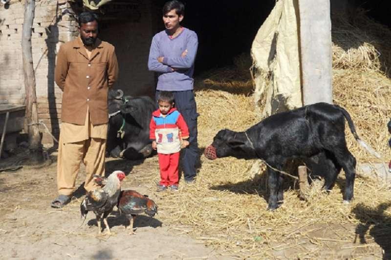 巴基斯坦婆家有個養牛場。(亞瑟蘭提供)