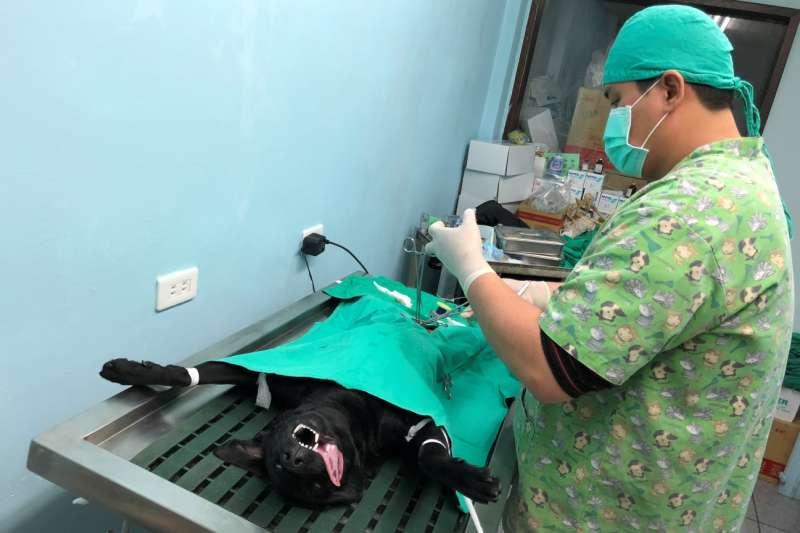 花蓮縣府今年結合社團法人中華民國保護動物協會辦理「家犬絕育經費補助」活動,從源頭解決流浪動物問題。(圖/花蓮縣政府提供)