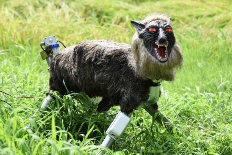 超級怪獸狼可發出多達 50 種叫聲,甚至包含彷彿電視劇台詞般的句子,嚇跑想偷吃農作物的動物們。(圖/智慧機器人網提供)