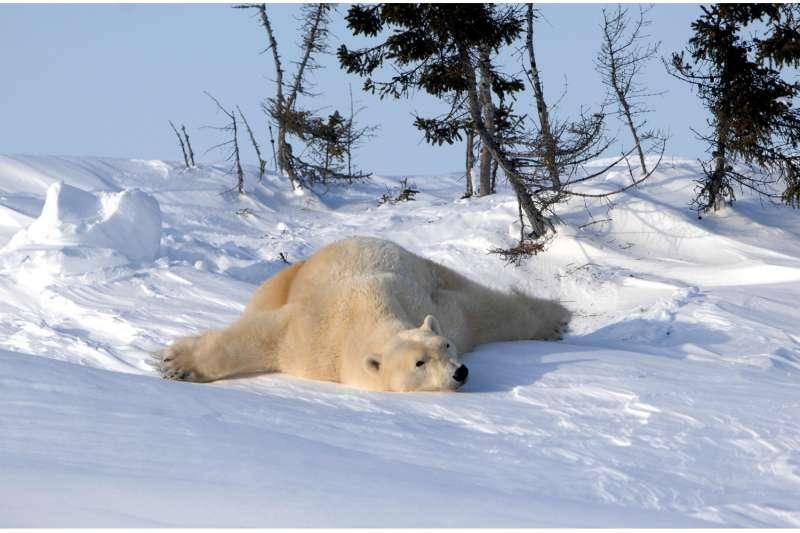 要捕捉到北極熊的倩影,必須要有能守候數日的耐心和能忍受零下四十度酷寒的體力,這可不是一般人能做到的阿!(圖/時報出版提供)