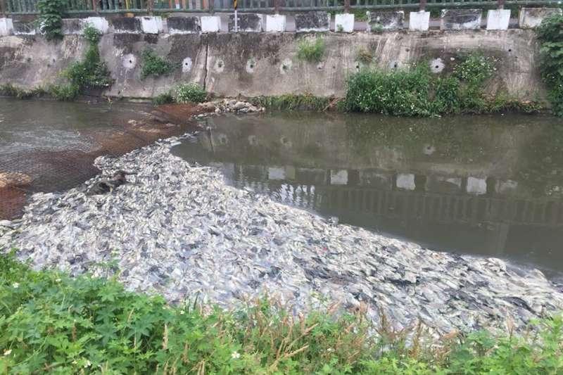 桃園敬鵬工廠大火,河川污染死魚達13.5噸。(翻攝黃志杰臉書)