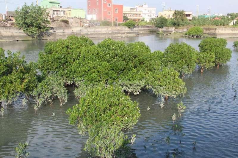 紅樹林將納入龜殼公園範圍進行整體規劃。(圖/臺中市政府建設局提供)
