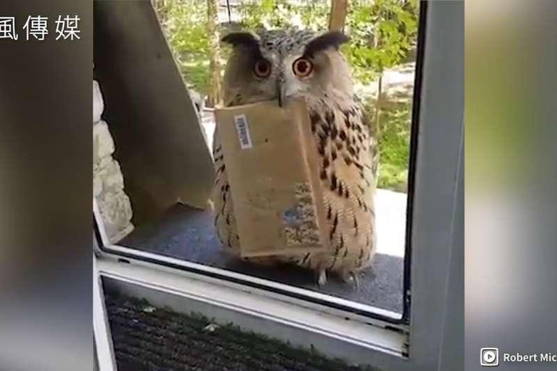 霍格華茲的入學通知書?!貓頭鷹叼著郵件呆萌站窗外,萌翻網友!