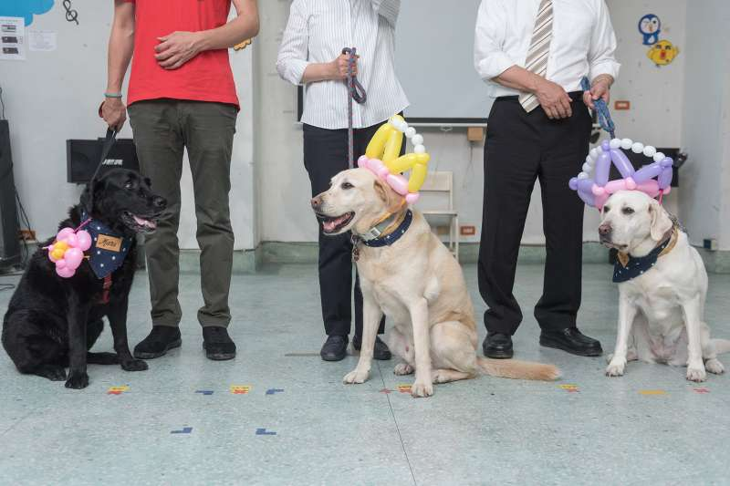 導盲犬貼心、善解人意,是許多視障者的好夥伴。(示意圖,非當事狗/ 總統府@flickr)