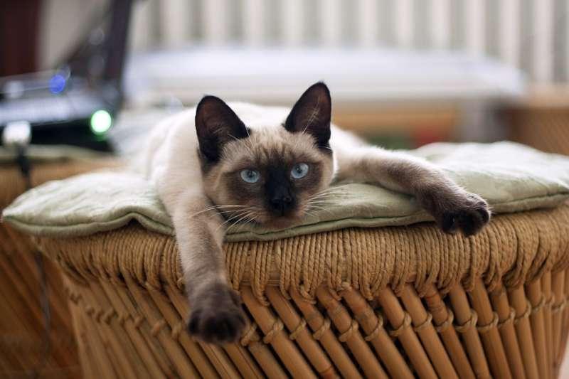 長期待在居家院子、陽台的貓犬,皆是容易感染心絲蟲的主要對象,飼主不得不慎。(示意圖/liliy2025@pixabay)