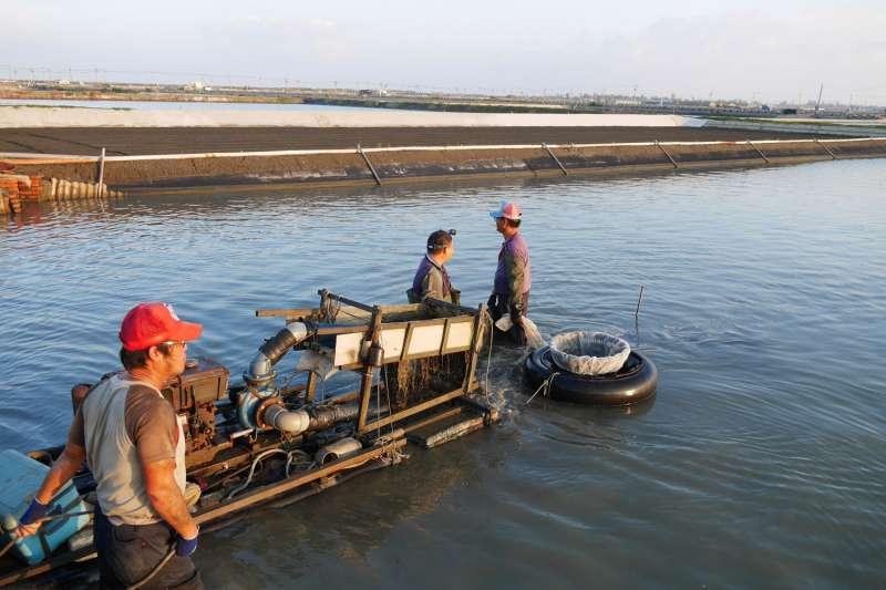 魚塭水質益菌數直接影響文蛤育成率,不少養殖漁民感嘆越來越難養(圖/甲宸生技提供)