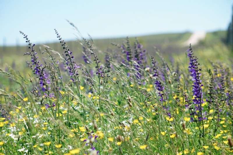 春天鄉間的野花。(曾廣儀攝)