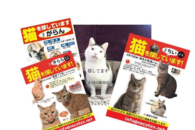 日本關西各地因日前強震傳出多起「貓咪逃家」災情。(翻攝推特)