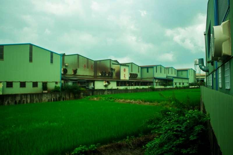 此處為台中大里的西湖地區,農地長滿工廠,稻田被工廠包圍。(作者提供)