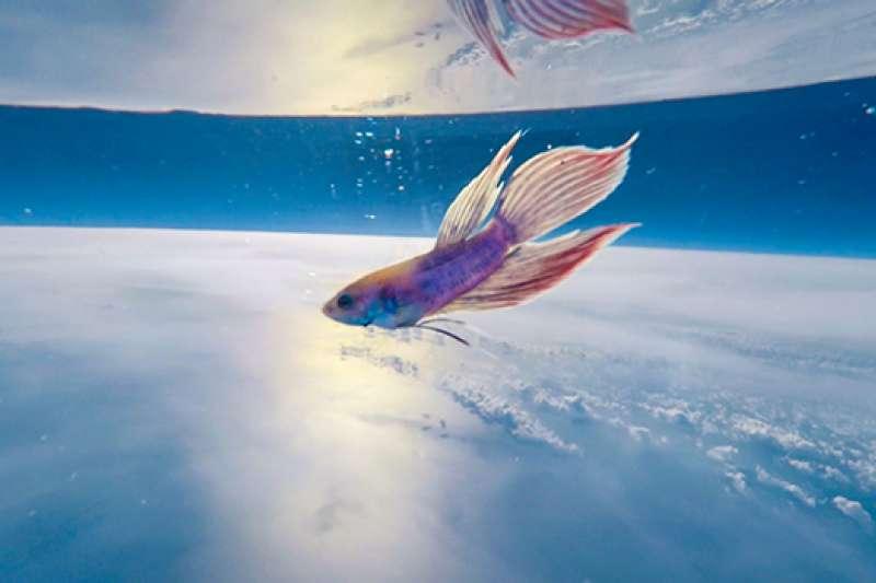 魚兒徜徉在太空的絕美畫面。(圖/翻攝自ふうせん宇宙撮影)