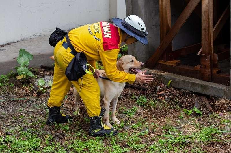 搜救犬須於15分鐘內在40立方米的空間中,找到生還者並持續吠叫,才能通過搜救犬的國際認證。(圖/屏東縣政府消防局)