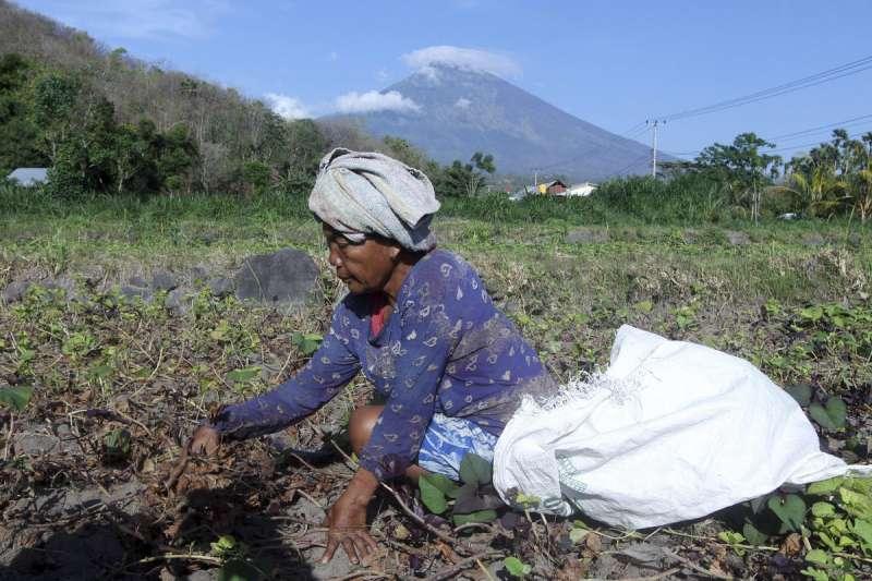 印尼的年輕人都到大城市工作,務農人口的年齡愈來愈高。(美聯社)