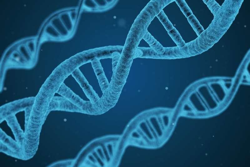 遺傳學的誤用,一再造成人類史上慘痛的災難,例如納粹的集體屠殺即是以「科學」為名殘害他人。究竟我們該如何理解「基因」、避免慘劇再發生呢?(圖/pixabay)