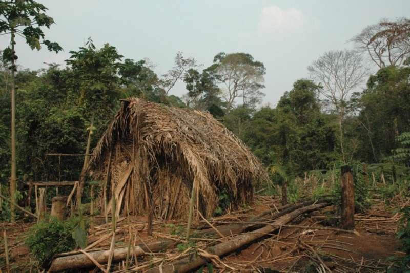 亞馬遜土著的房子。(取自Survival International)