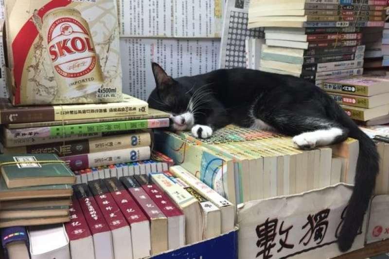 香港森記書店目前有32隻貓。(BBC中文網)