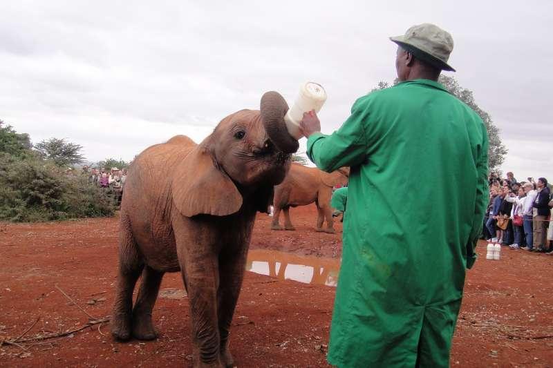 保育員說,因為人口增加,土地面積與水源不足,加上人類覬覦象牙的貪婪之心,造成野生象的生存危機。(圖/謝幸吟提供)