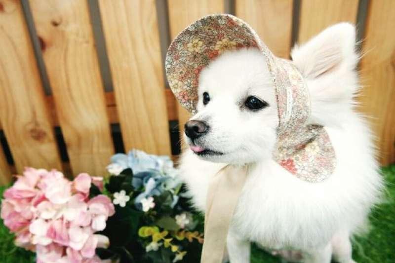 寵物專用的遮陽帽。(翻攝Colette Mungmung)