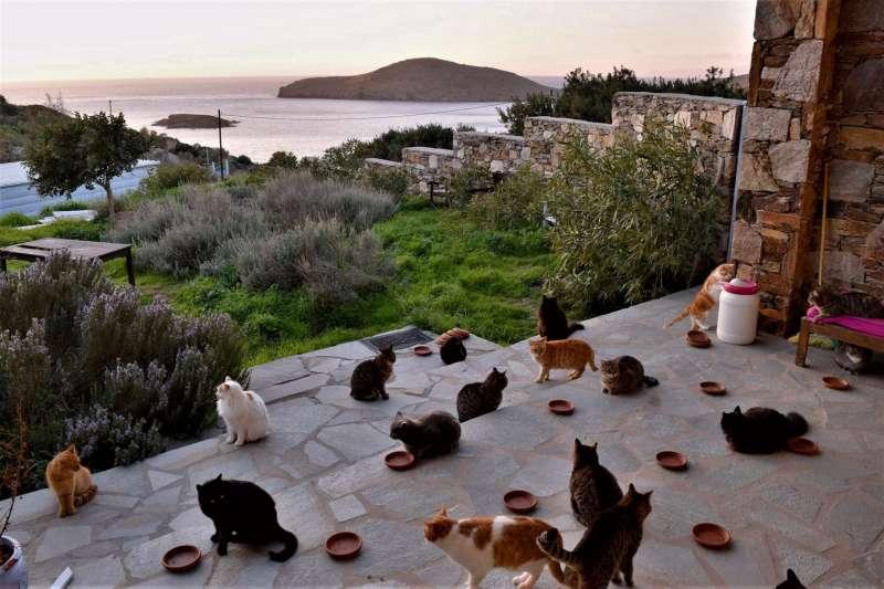 希臘貓咪庇護所老闆在臉書上PO出一則徵才文,希望找人幫忙顧貓,條件超好,被貓奴譽為夢幻職缺。(圖/取自Joan Bowell臉書)