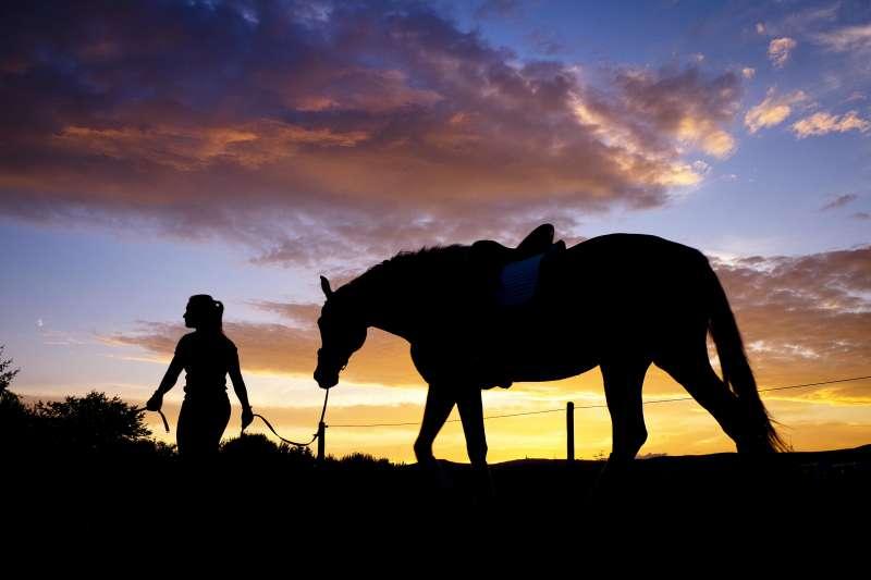 美國西北部的奧勒岡州8歲的馬兒「正義」遭前飼主虐待,美國動物權團體以牠的名義提告飼主,圖非當事馬。(AP)