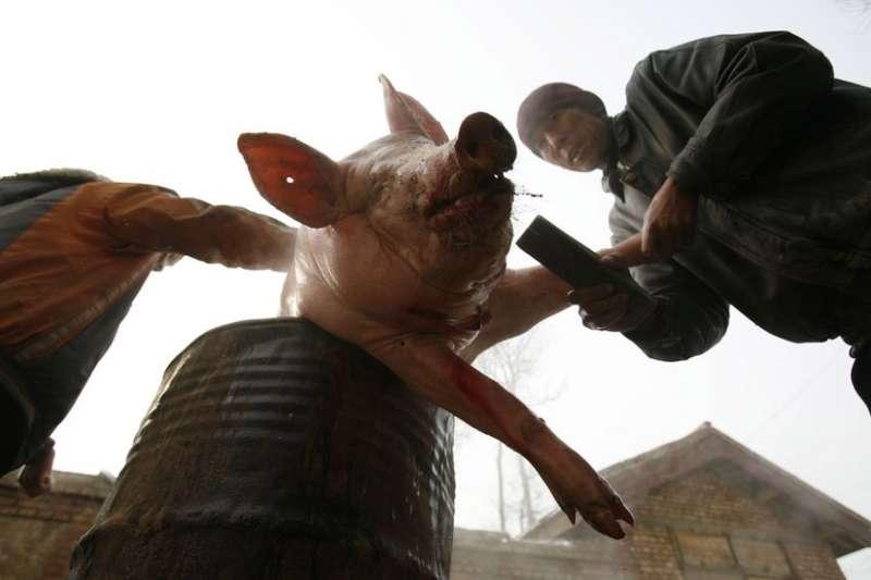截至8月24日,中國官方通報共有四個省份出現「非洲豬瘟」疫情。(BBC中文網)