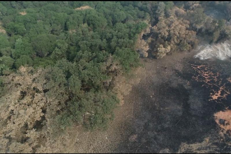 空拍加州火災現場。(張經義提供)