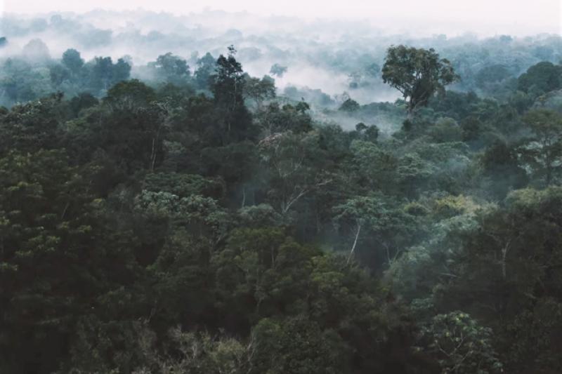 你丟掉的舊手機,可能是別人的救星!巴西原住民「改裝舊手機」在雨林中佈下綿密的「監聽網」,有效防範盜伐者偷砍樹。(圖/截自Youtube,智慧機器人網提供)