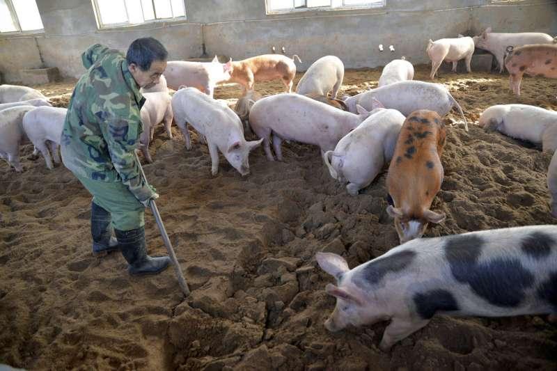 中國的豬瘟問題已經引發國際關注。(美聯社)
