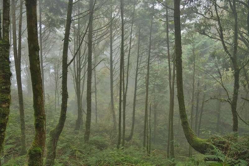 2014年共有十八處被評選為「臺灣世界遺產潛力點」,其中「棲蘭山檜木林」為臺灣世界遺產潛力點之一。圖為棲蘭山檜木林。(Ray Swi-hymn@Flickr)