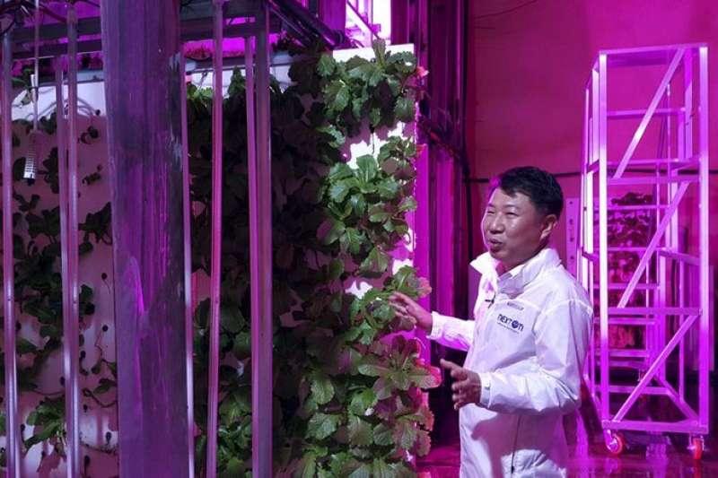 NextOn能源公司董事長崔在斌(Choi Jae Bin,音譯),8月9日向媒體解說自家溫室運作機制。