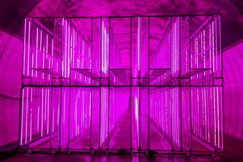 南韓隧道溫室菜園。(AP)