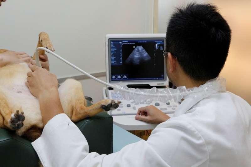 進入秋季,全國動物醫院台中大里分院免費提供中部地區毛小孩腹腔超音波檢查。(圖/全國動物醫院提供)