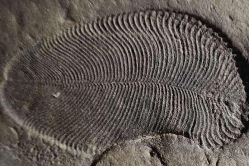 狄更遜水母化石經分析成分後發現有屬於一種脂肪的膽固醇分子,證實是地球上已知最早的動物。