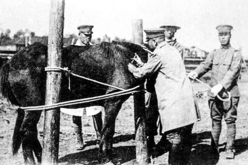 侵華日軍第100部隊技術人員給馬匹注射疫苗(新華社)