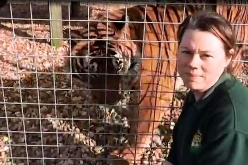 2017年,英國一動物園有飼養動物學歷和富有經驗的飼養員被老虎咬死。(BBC中文網)