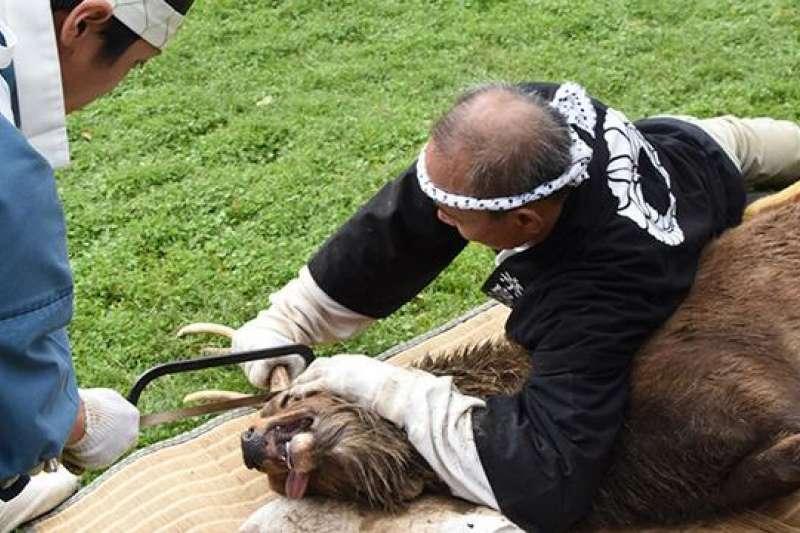 奈良秋季傳統活動「鋸鹿角」 江戶時代流傳至今。(圖/潮日本提供)
