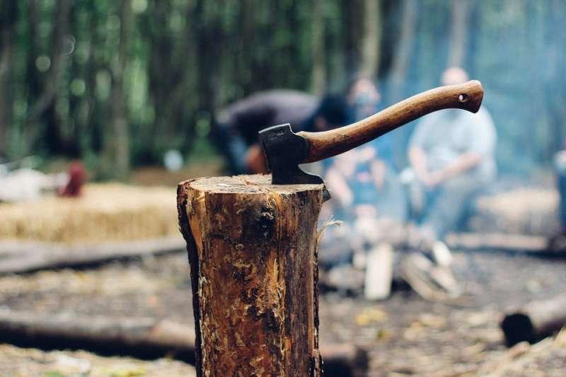 一株能產出良木的大樹,起碼要四、五十年以上的歲月。(示意圖/Free-Photos@pixabay)
