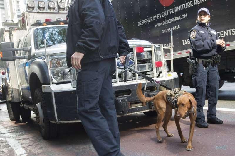 紐約市警方出動警犬搜查。(美聯社)