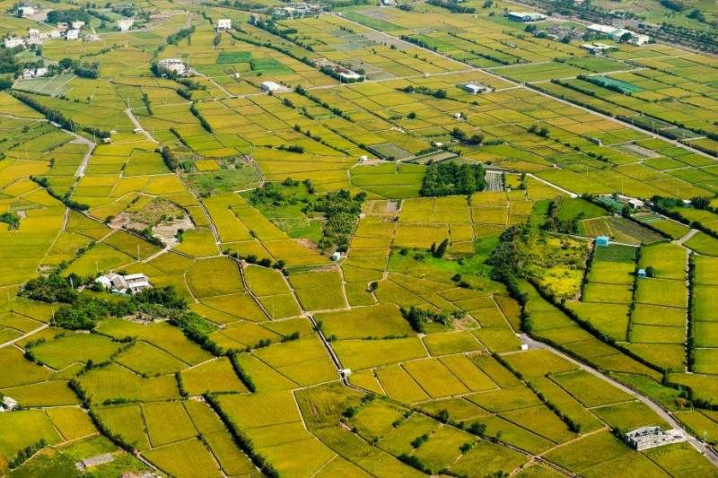 農委會日前宣布,嘉南灌溉區明年1期水稻停灌。示意圖。(資料照,台中市政府提供)