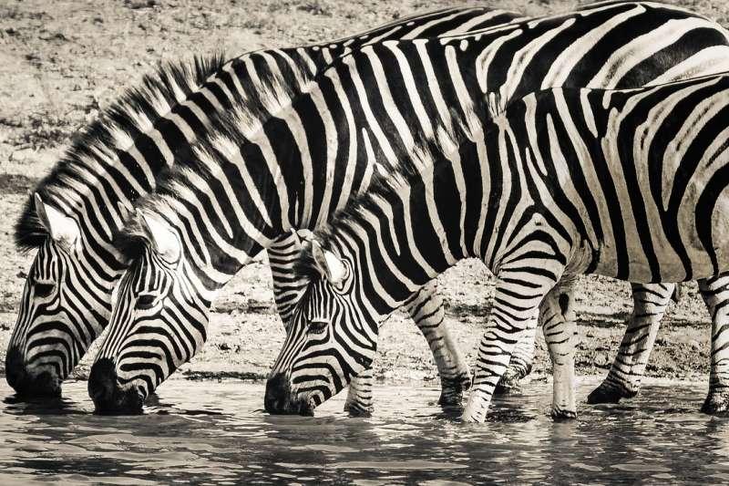 許多野生動物瀕臨絕種,自然界是否已經承受不住人類的消耗?