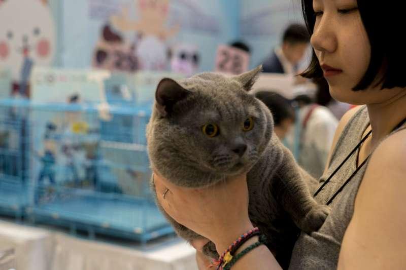武漢一間商場舉辦寵物比賽。(圖/*CUP提供)
