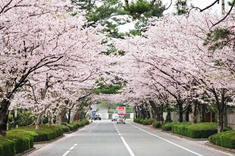 日本笠間市成功運用大數據與雲端系統技術與醫療整合,讓民眾免去複檢的困擾,並能及時治療身體病痛,而日本的經驗又能如何套用在台灣呢?(圖 / gtknj@flickr)