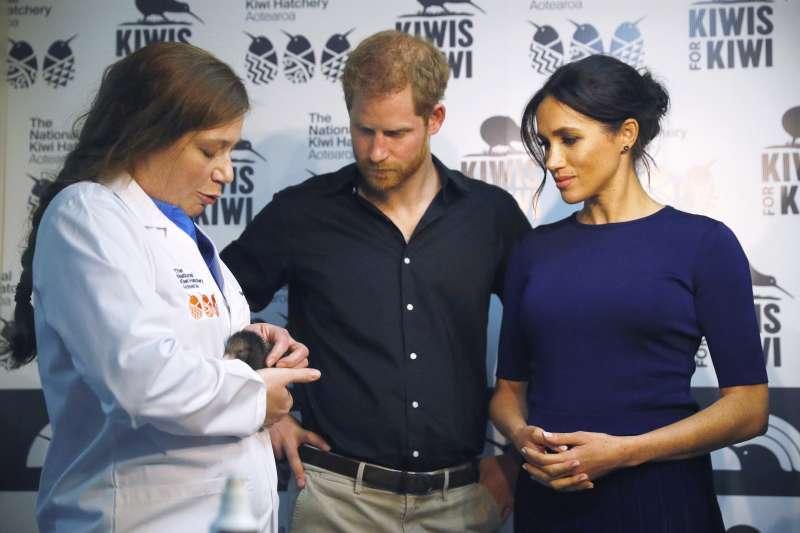 英國哈利王子與愛妻梅根,「會見」一隻紐西蘭「國鳥」鷸鴕(Kiwi),又名「奇異鳥」(AP)