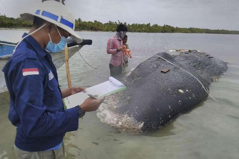 抹香鯨胃內驚見5.9公斤塑膠垃圾(AP)