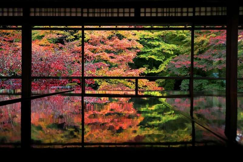 瑠璃光院的書院2樓。窗面一整片紅葉倒映在桌面上。(圖/潮日本)