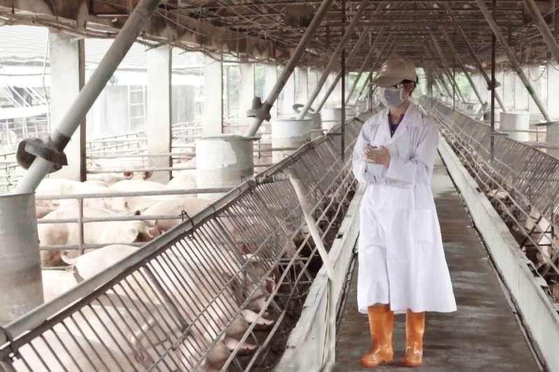 為促進國內養豬產業升級,台糖公司正著手規劃整體畜舍改建,以達成養豬產業「零污染」、「零廢棄」及「零事故」的經營環境。(圖/台糖提供)